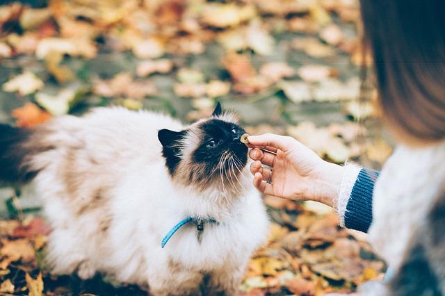 Tips och råd för kattägaren